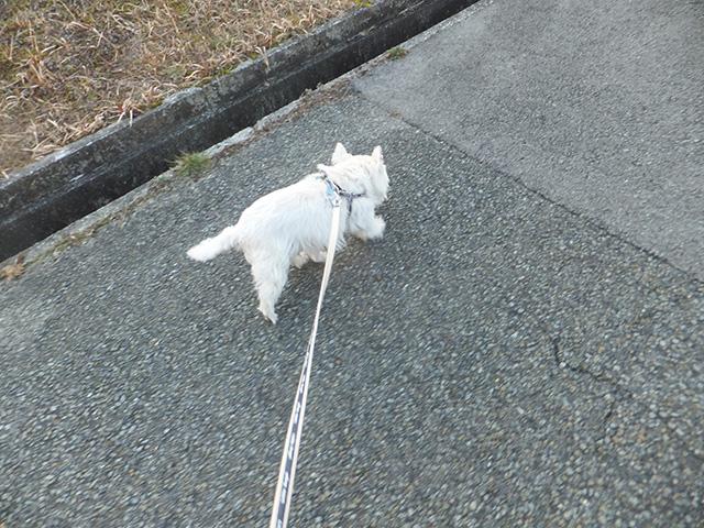 はちのお散歩