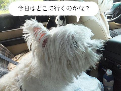 トリミングへGo ♪