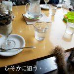 テリア家さんと1dayツアー♪〜篠山から伊丹〜